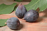 Local Figs -Anam Cara Empowerment Retreat - a place to learn  to heal your cancer with alternative holistic approach of energy healing and core energetics.